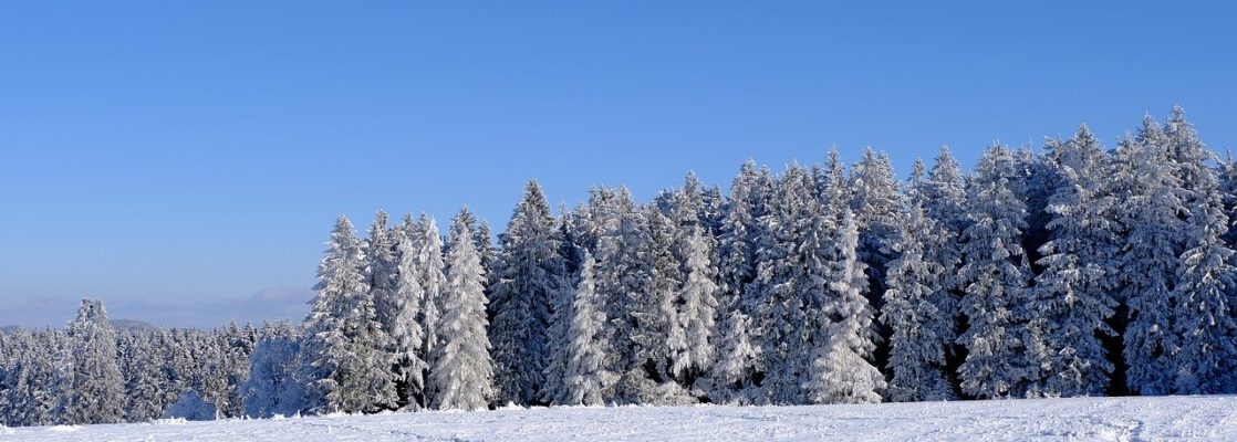winter, trees, snowy