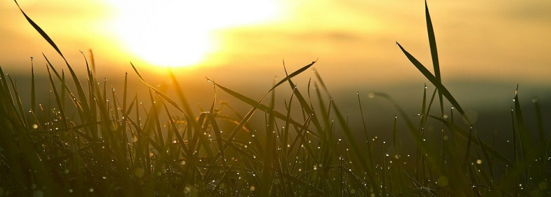 grass, sunrise, sun