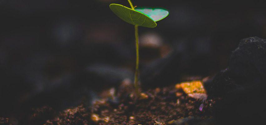 plant, growth, leaf